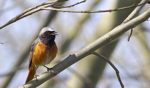 Overmeerse Vogels
