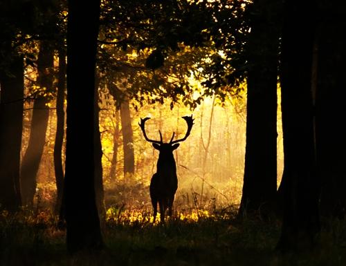 Promenons nous dans les bois for Dans la foret un grand cerf regardait par la fenetre