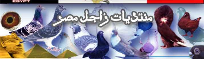 منتديات زاجل مصر