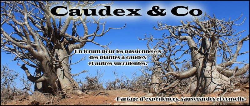 Caudex & Co