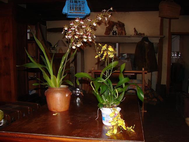 soins des orchid es page 2. Black Bedroom Furniture Sets. Home Design Ideas