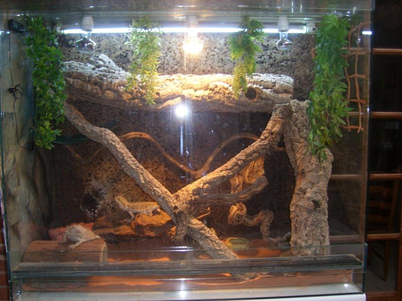 idee deco terrarium serpent