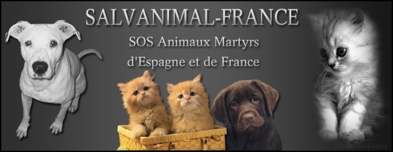 Salvanimal France Rescue