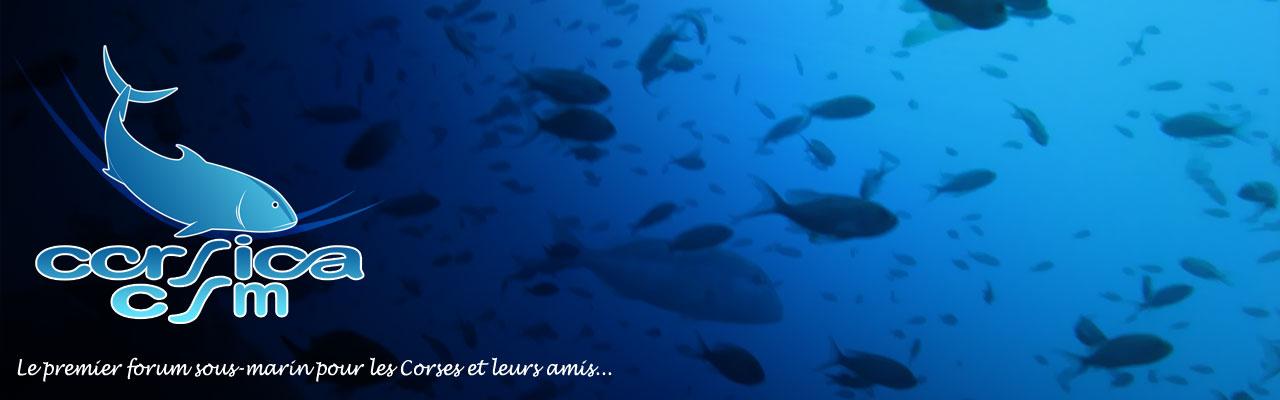 Corsica CSM
