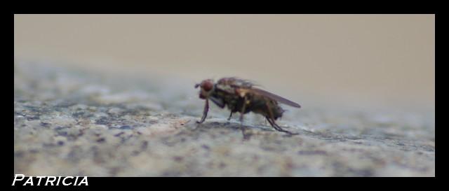 la mouche dans animaux 027010