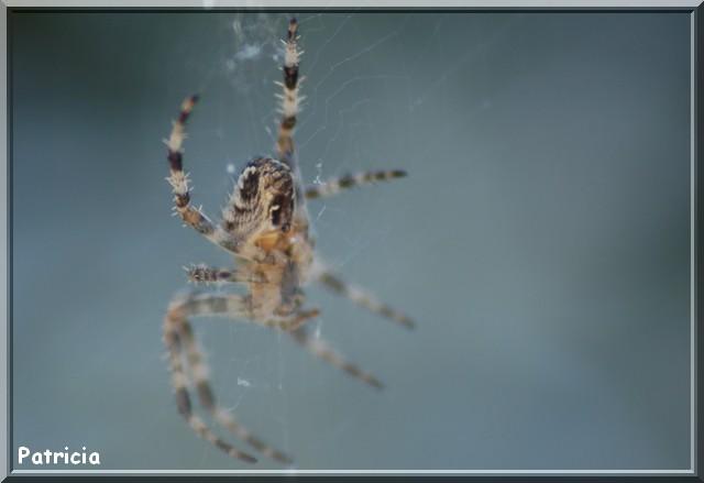 araign15 dans animaux