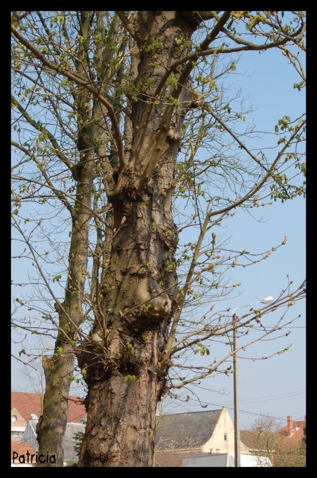 Nature dans MWA, ma FamiLle, Mes aMiS arbre10