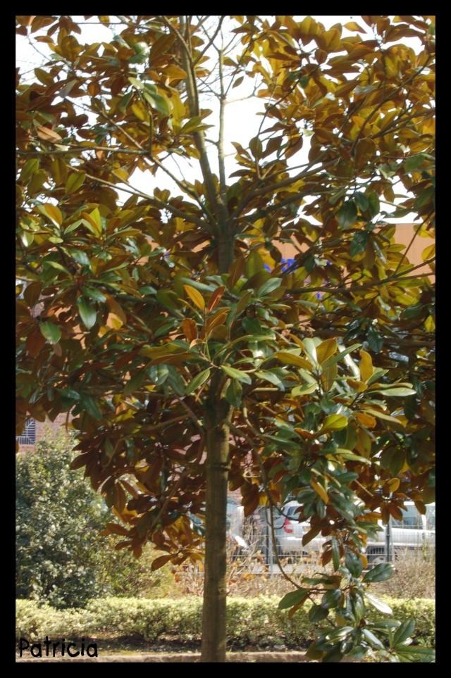 jardin public ! dans nature arbre110