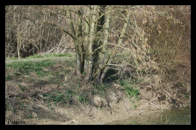 arbre_10 dans nature