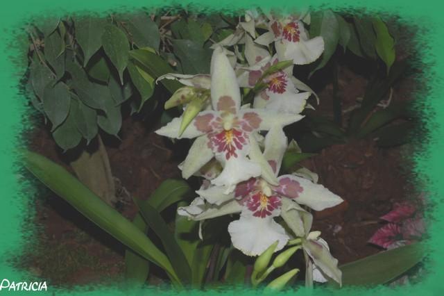 dsc_0112 dans fleurs