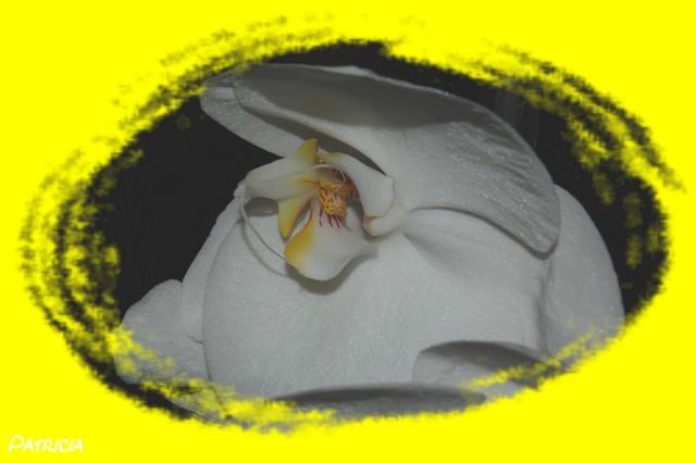 orchidées dans fleurs dsc_0118