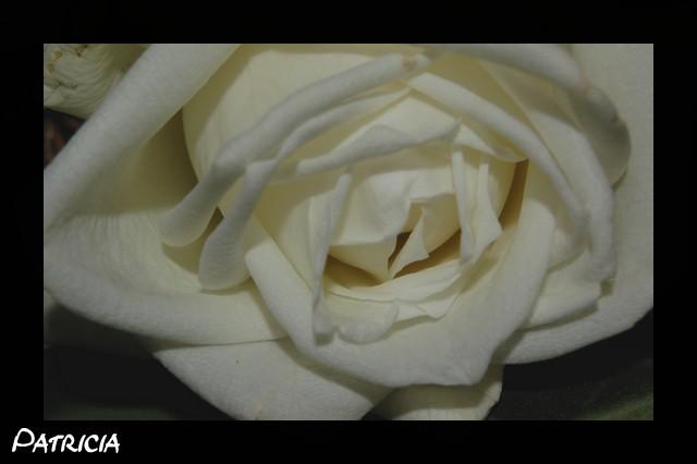dsc_0212 dans fleurs