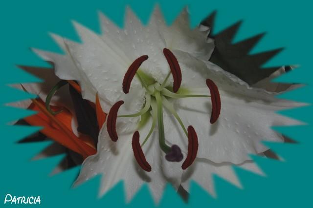 dsc_0221 dans fleurs