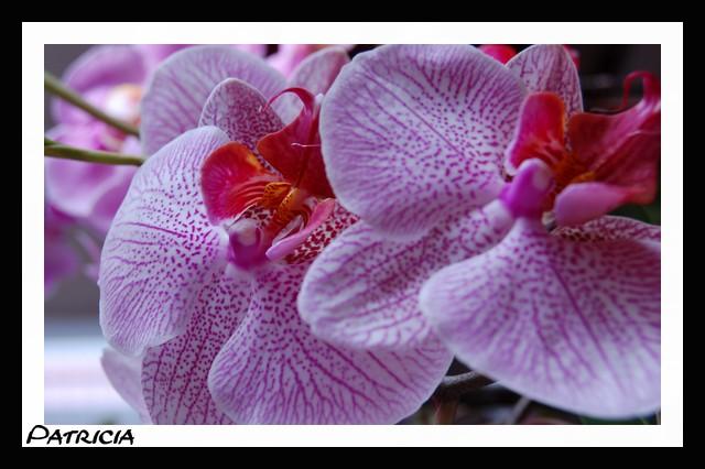 dsc_0231 dans fleurs