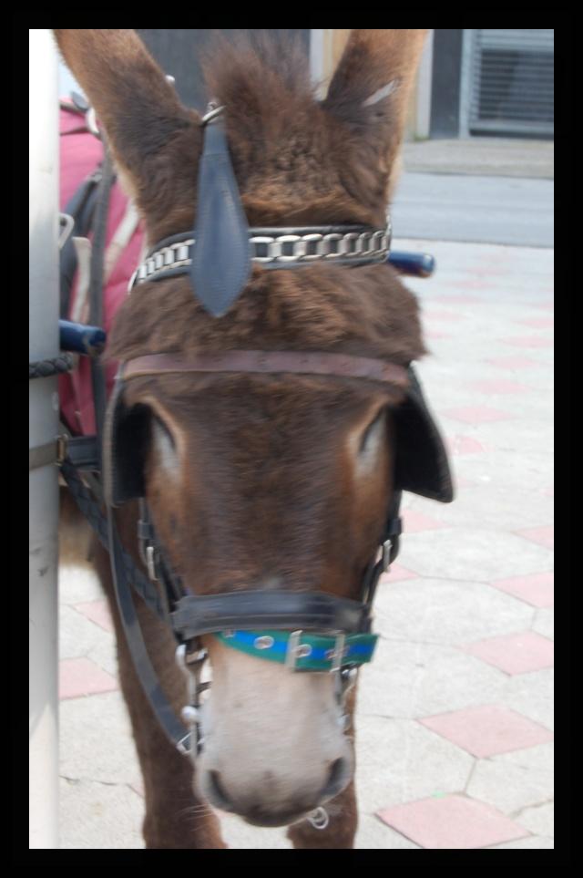 rencontre avec un âne .. dans animaux dsc_0315