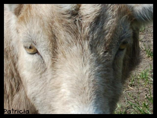 DEVINETTE ... dans animaux gropla10