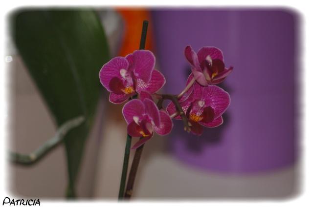 orchid11 dans nature