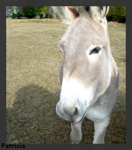 des ânes encore! dans animaux p49210