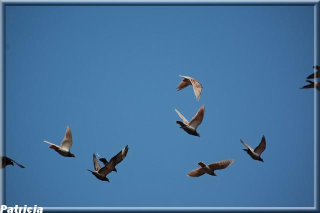 vol d'oiseau dans nature vol110