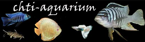 Chti-Aquarium