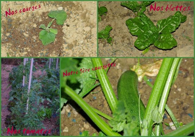 notre jardin... dans divers 16-06-11