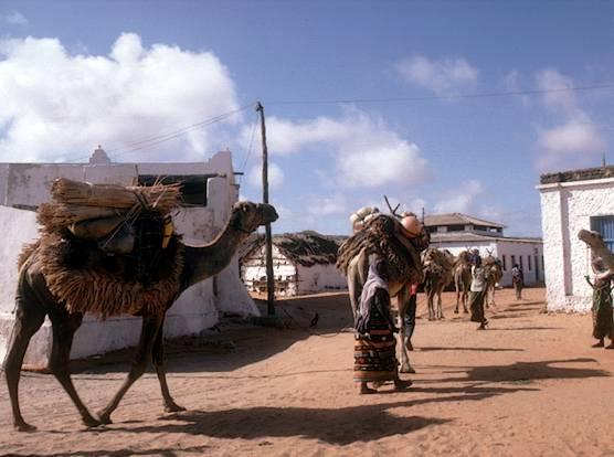 لماذا تكون فخورا بانك عريى somali11.jpg