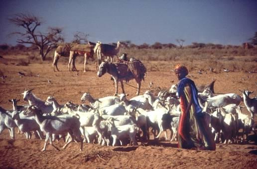 لماذا تكون فخورا بانك عريى somali13.jpg