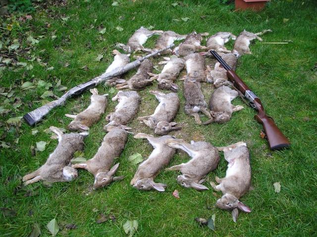 Nos amours de lapin membres - Cuisiner un lapin de garenne ...