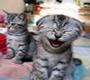 http://i86.servimg.com/u/f86/12/86/38/30/cats10.jpg