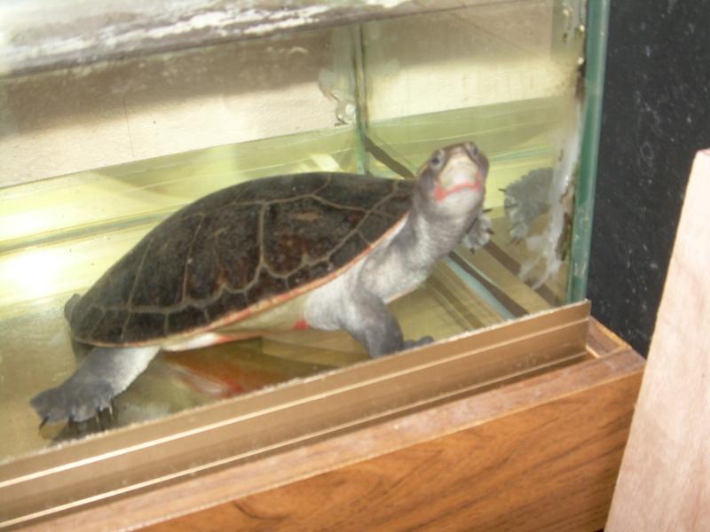 Bassin d 39 int rieur pour tortue - Aquarium complet pour tortue d eau ...