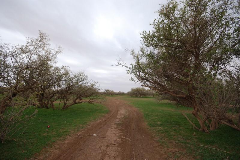 الصمان اورباء وسكانها وجبالها