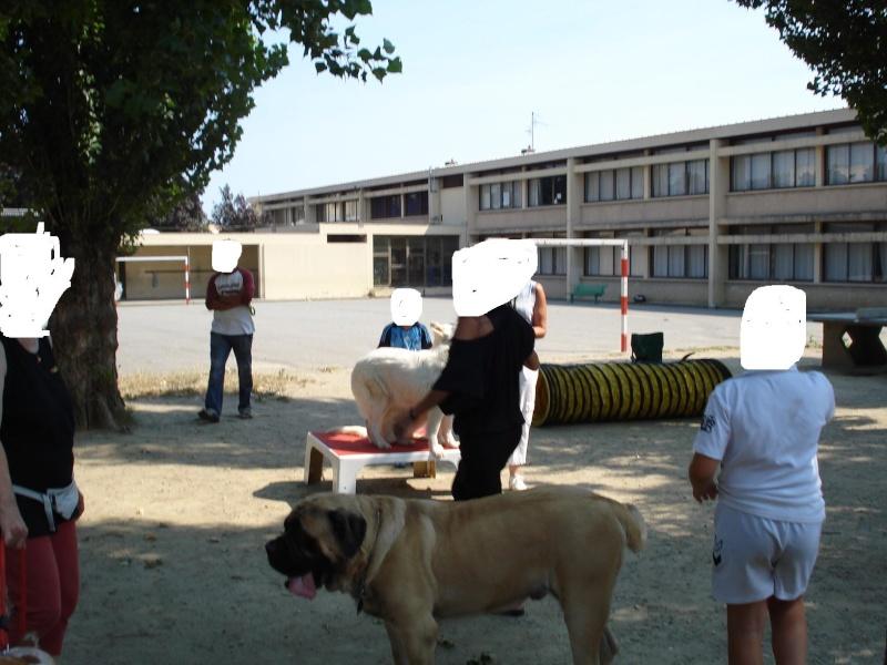 chien visiteur