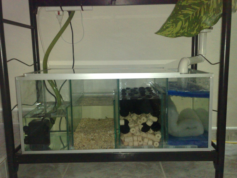 New trickle filter for my fish tank jane and didier in for How to make a fish tank filter