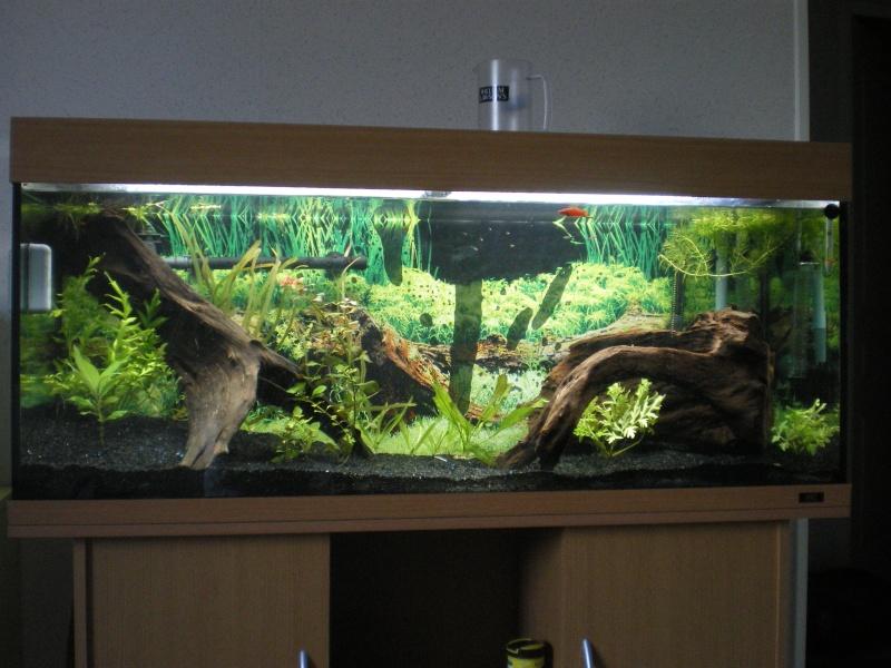 mon 240 litres et son renouvellement forum poissons. Black Bedroom Furniture Sets. Home Design Ideas
