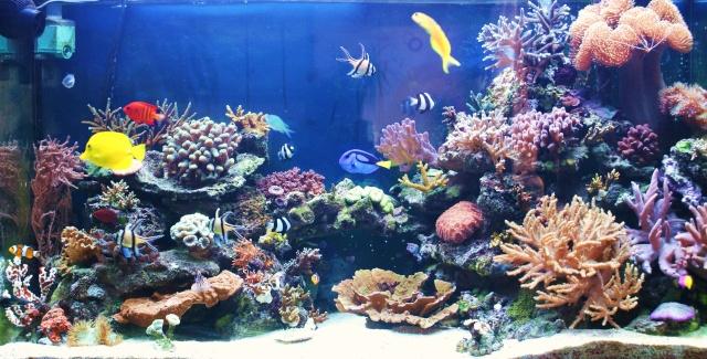 aquarium eau de mer 180l. Black Bedroom Furniture Sets. Home Design Ideas