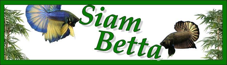 Siam-betta
