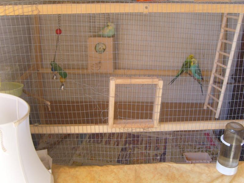 Du sang dans la cage bagare - Maison a oiseaux a faire soi meme ...