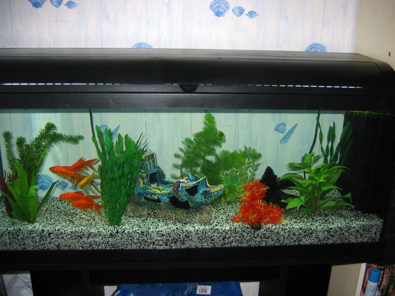 Aquarium poisson rouge for Aquarium poisson rouge nettoyage