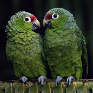 Parrot Partnervermittlung 16. November