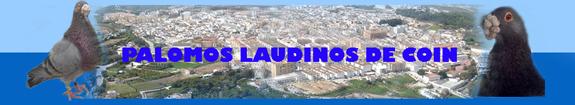 PALOMOS LAUDINOS DE COIN