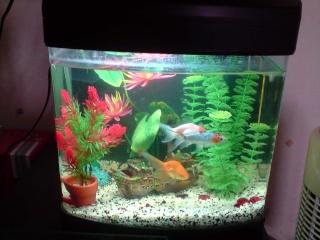 Mes aquariums for Poisson aquarium 30l