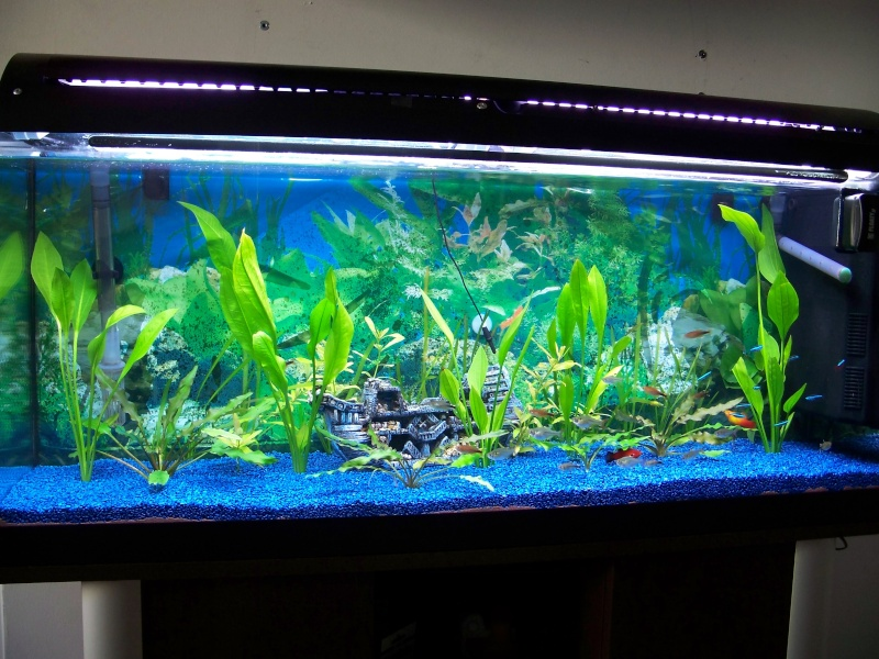 Mon aquarium for Sable pour aquarium