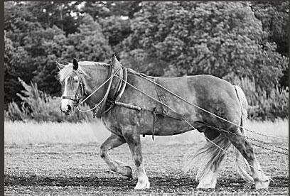 cheval11.jpg