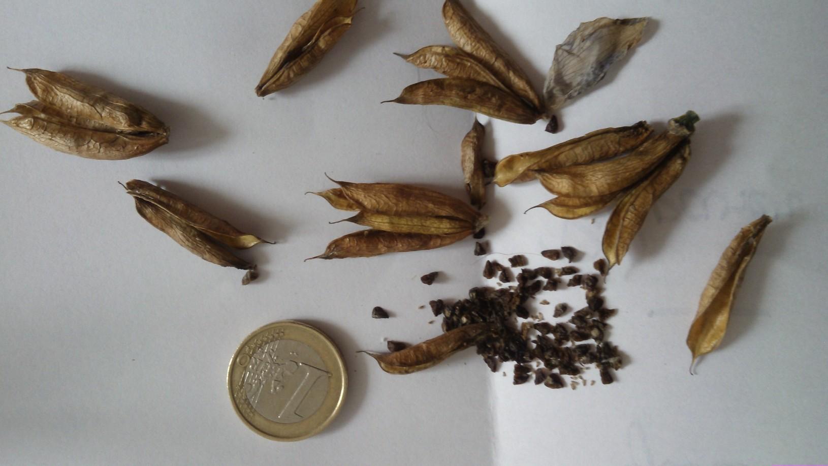 Les petites belge je baise au 1er j encule au 2eme et au 3eme de pierre moro anastasia kassnana - 2 2