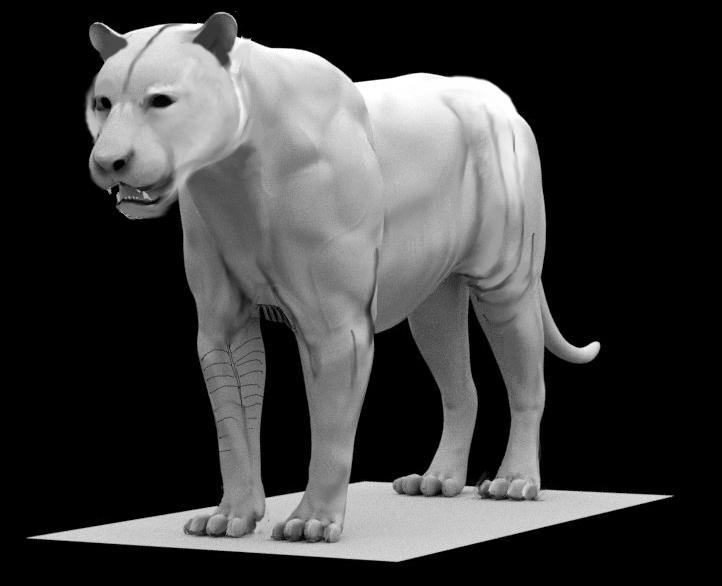 tigre010.png