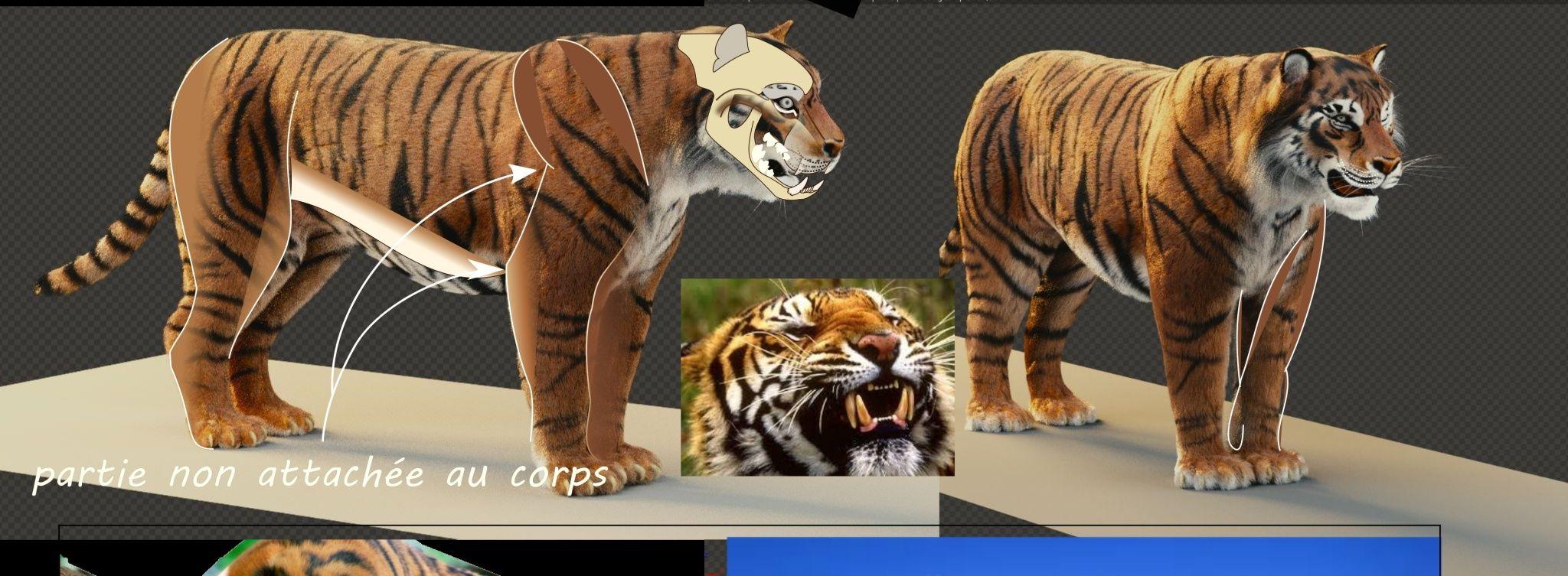 tigre_11.jpg