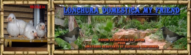 Lonchura Domestica my Friend - Forum