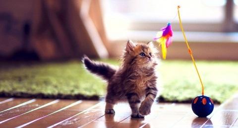 play-kitty.com фото девушек