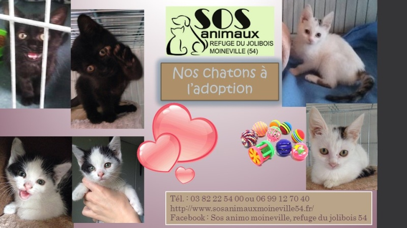 SOS ANIMAUX MOINEVILLE : Les chatons à adopter