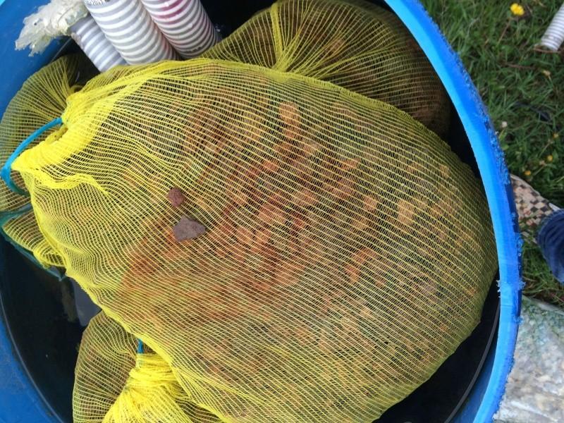 Tutoriel r aliser un filtre efficace pour bassin ko s for Filtre bassin poissons rouges
